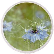 Round Beach Towel featuring the photograph Nigella Damascena by Cindy Garber Iverson