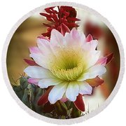 Round Beach Towel featuring the photograph Night-blooming Cereus 2 by Marilyn Smith