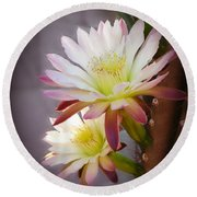 Round Beach Towel featuring the photograph Night Blooming Cereus by Marilyn Smith