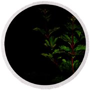Night Garden Round Beach Towel