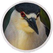 Night Heron Portrait Round Beach Towel by Mitch Shindelbower