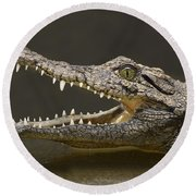 Nile Crocodile Round Beach Towel