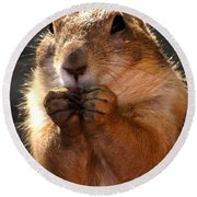 Snacking Prairie Dog Round Beach Towel