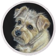 Round Beach Towel featuring the drawing Norfolk Terrier 'hattie' by Donna Mulley