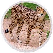 North African Cheetah Round Beach Towel