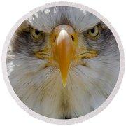 North American Bald Eagle  Round Beach Towel