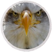 North American Bald Eagle  Round Beach Towel