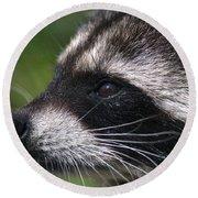 North American Raccoon Profile Round Beach Towel