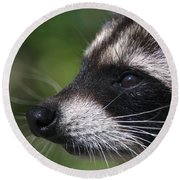 North American Raccoon Profile Round Beach Towel by Sharon Talson