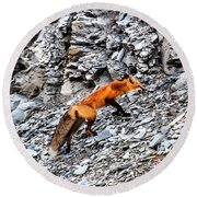 North American Red Fox Round Beach Towel by Daniel Hebard
