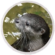North American River Otter Swimming In A River Round Beach Towel