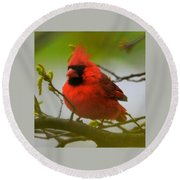 North Carolina Cardinal Round Beach Towel