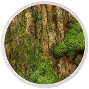 Round Beach Towel featuring the photograph North Side Of The Tree by Mike Eingle