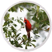 Northern Cardinal - In The Wind Round Beach Towel