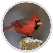 Round Beach Towel featuring the photograph Northern Cardinal In Winter by Mircea Costina Photography