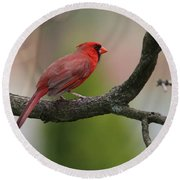 Northern Cardinal Round Beach Towel by Living Color Photography Lorraine Lynch