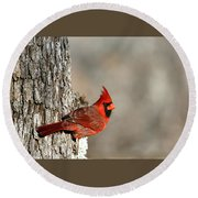 Northern Cardinal On Tree Round Beach Towel