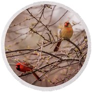 Round Beach Towel featuring the photograph Northern Cardinal Pair In Spring by Terry DeLuco
