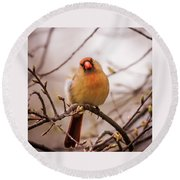 Northern Female Cardinal Pose Round Beach Towel by Terry DeLuco
