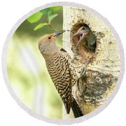 Northern Flicker Feeding Baby Round Beach Towel