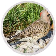 Northern Flicker In The Backyard Round Beach Towel