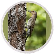 Northern Flicker On The Hunt Round Beach Towel