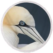 Northern Gannet At Troup Head - Scotland Round Beach Towel