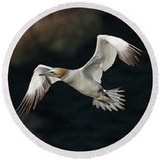 Northern Gannet In Flight Round Beach Towel