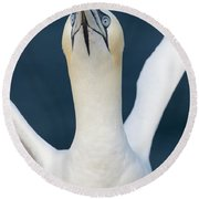 Northern Gannet Stretching Its Wings Round Beach Towel