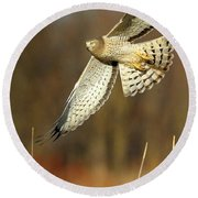 Northern Harrier Banking Round Beach Towel