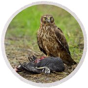 Round Beach Towel featuring the photograph Northern Harrier by Doug Herr