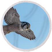 Round Beach Towel featuring the photograph Northern Hawk Owl Hunting by Mircea Costina Photography