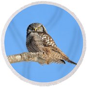 Northern Hawk-owl On Limb Round Beach Towel