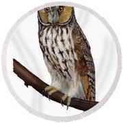 Northern Long-eared Owl Asio Otus - Hibou Moyen-duc - Buho Chico - Hornuggla - Nationalpark Eifel Round Beach Towel