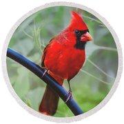 Northern Male Red Cardinal Bird Round Beach Towel