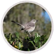 Northern Mockingbird Round Beach Towel
