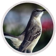 Northern Mockingbird Up Close Round Beach Towel