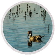 Northern Pintail At The Wetlands Round Beach Towel