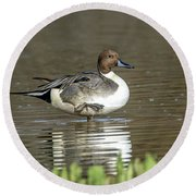 Round Beach Towel featuring the photograph Northern Pintail Duck by Tam Ryan