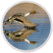 Northern Pintail With Reflection Round Beach Towel