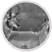 Northern Range Pronghorn Black And White Round Beach Towel