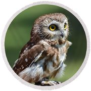 Northern Saw Whet Owl Round Beach Towel