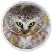 Round Beach Towel featuring the photograph Northern Saw-whet Owl Portrait by Mircea Costina Photography