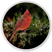 Northern Scarlet Cardinal On White Berries Round Beach Towel by Janette Boyd