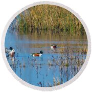 Northern Shovelers Round Beach Towel
