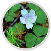 Northern Wood Sorrel Round Beach Towel