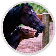 Round Beach Towel featuring the photograph Nose To Nose by Bryan Carter