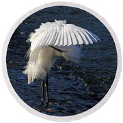 Round Beach Towel featuring the photograph Not Under Here - Birds - Snowy Egret by HH Photography of Florida