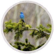 Notice The Pretty Bluebird Round Beach Towel by Yeates Photography