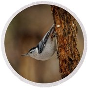Nuthatch 1 Round Beach Towel